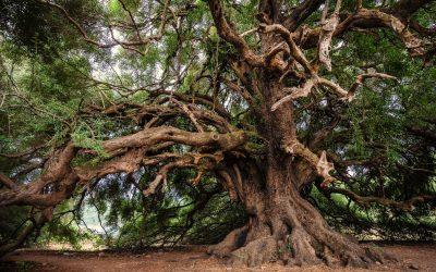 Barking up the Evolutionary Tree