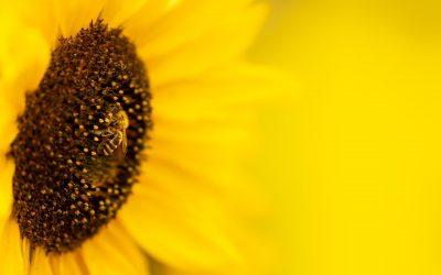 We are Bee-men